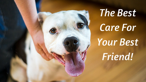 The Best Care For Your Best Friend!