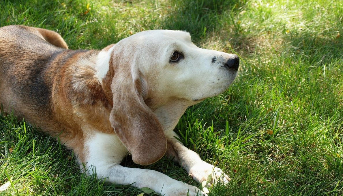 How to Help Your Senior Dog Stay Healthy