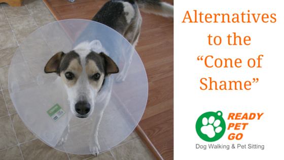 Alternatives To The Cone Of Shame Dog Walking And Pet