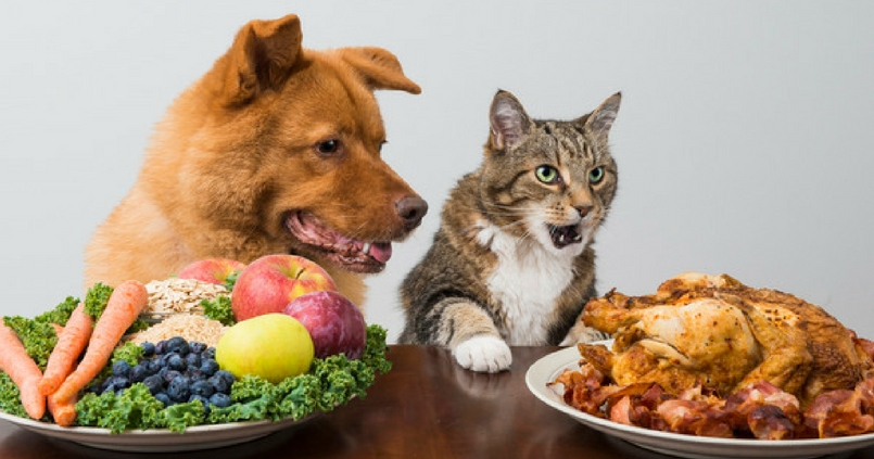 Image result for thanksgiving cats and dogs