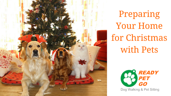 Preparing Your Home For Christmas With Pets Dog Walking