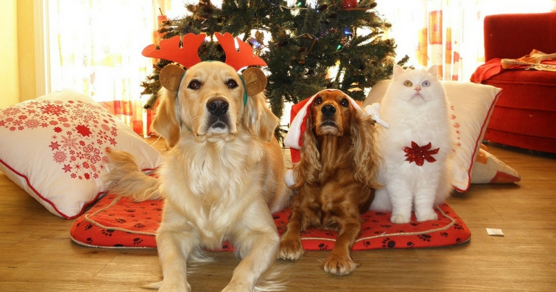 Image result for cat and dog in front of christmas tree