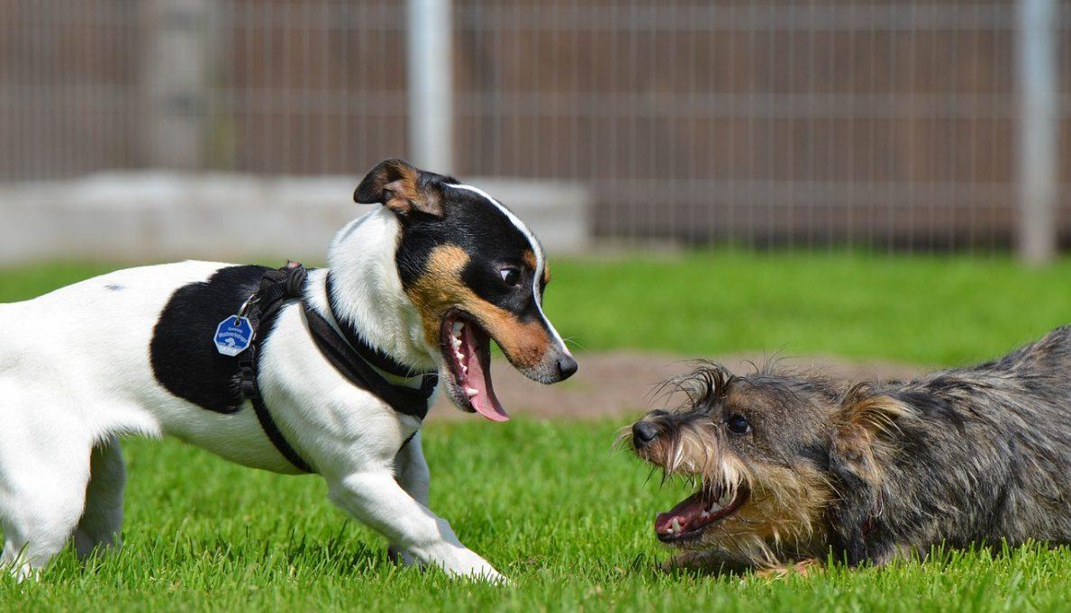 Frederick Maryland Dog Training