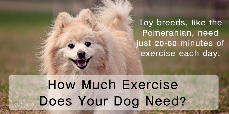 How much exercise does your dog need ready pet go for What a dog needs