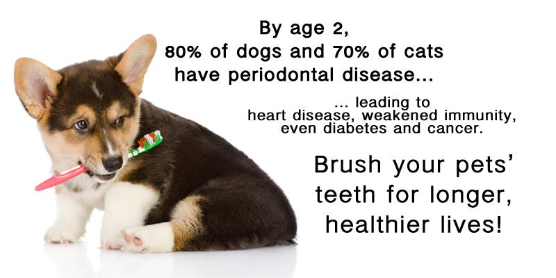 5 Ways To Help Your Pets Live Longer Dog Walking Amp Pet