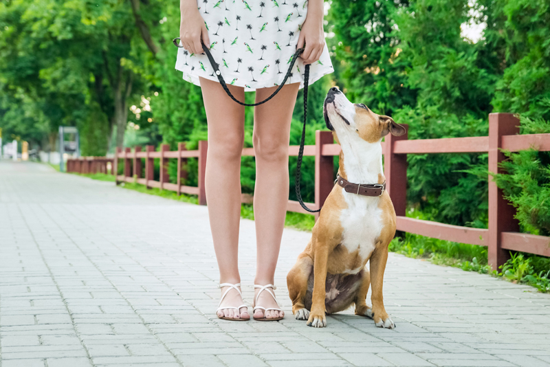 Dog Walking Service Frederick Md