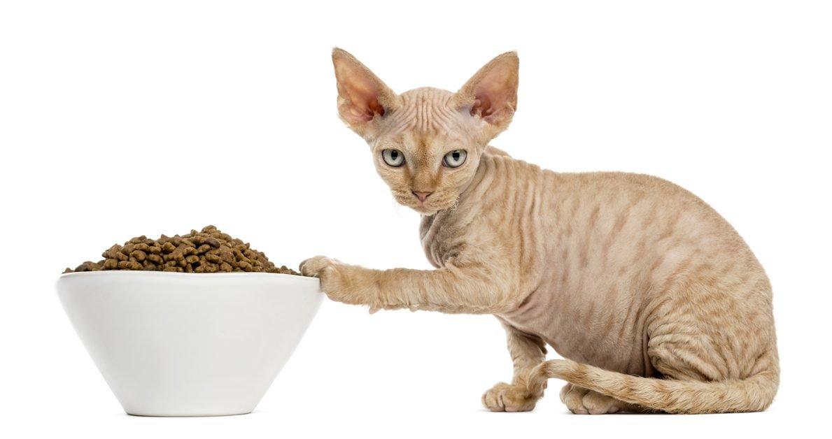 Dog Refusing Food Transition