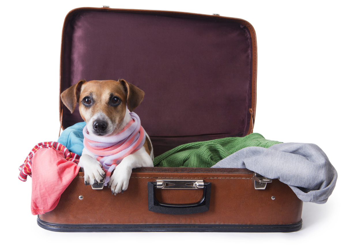 Traveling With Pets Within The United States