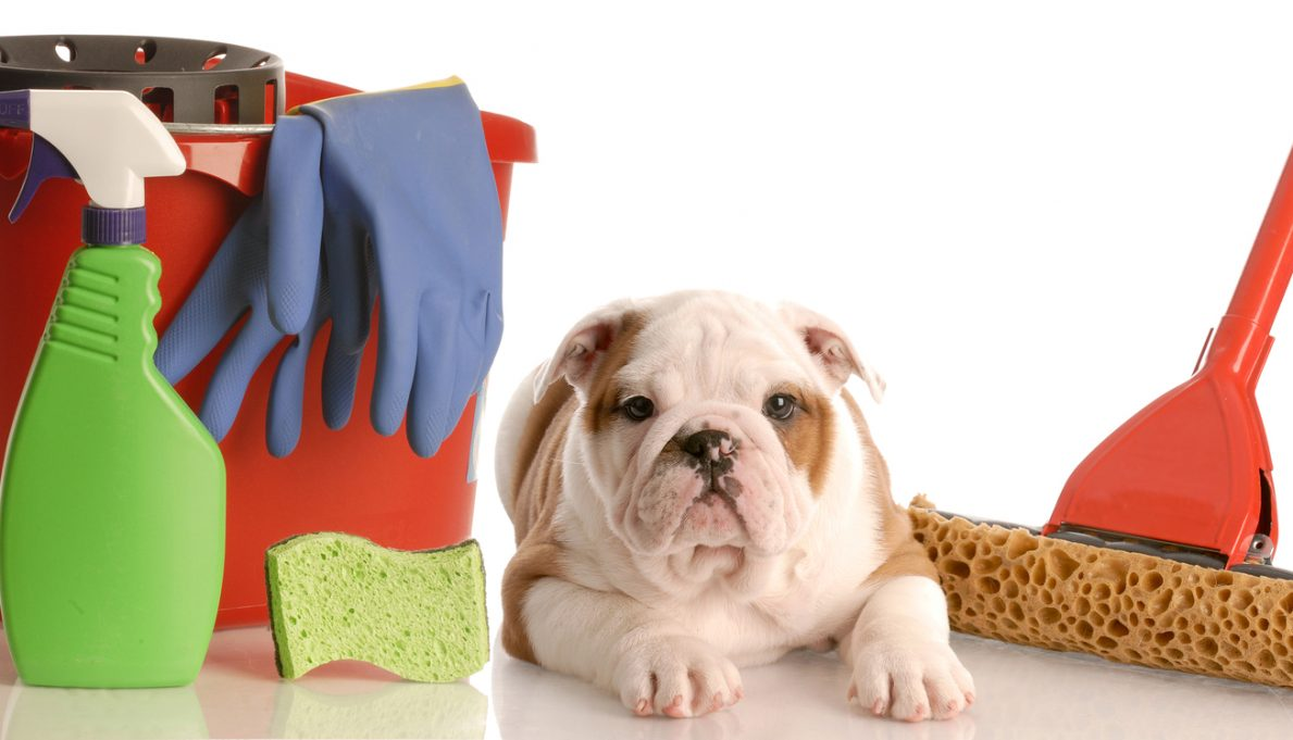 How To Keep Your House Clean With Pets Ready Pet Go