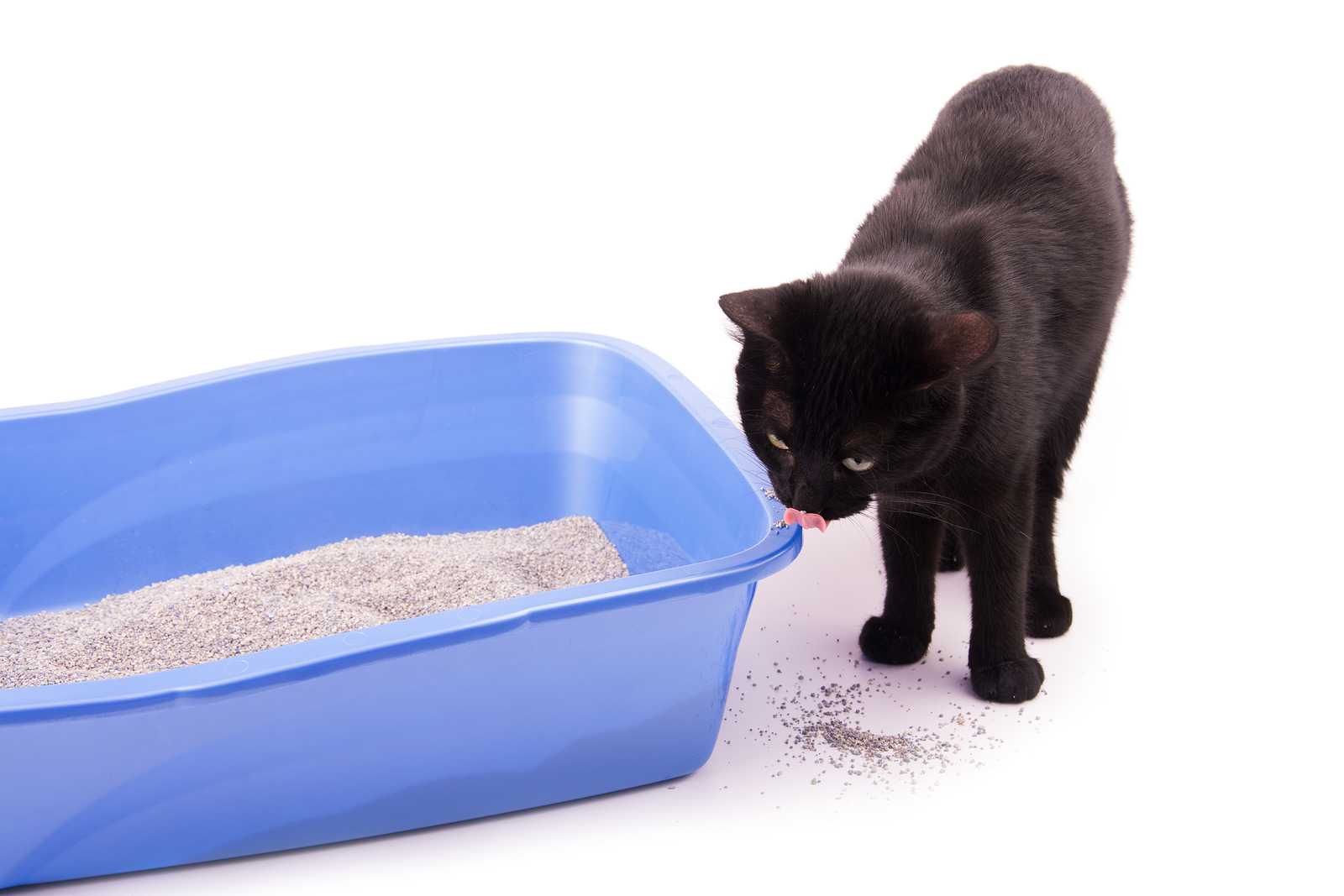 Cat Throws Poop Out Of Litter Box