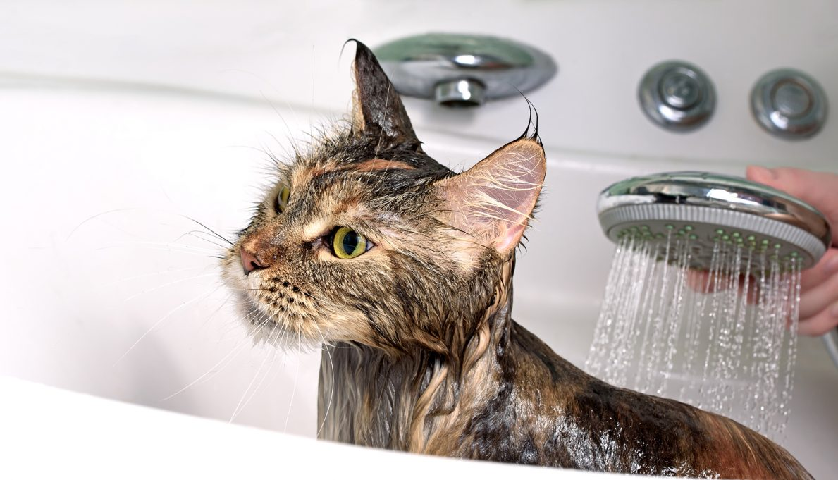 How Often Can You Give A Cat A Bath
