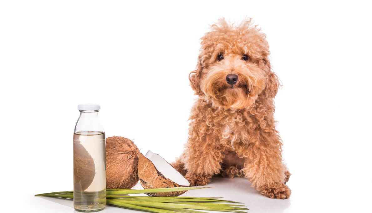 Is Coconut Oil Good For Cats And Dogs
